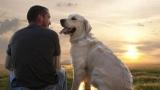 Сканер доказали, что собаки понимают человеческую речь