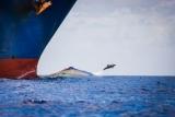 Из-за шума двигателей речи дельфинов легче
