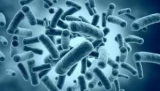 Бактерии нашли квантовой путаницы